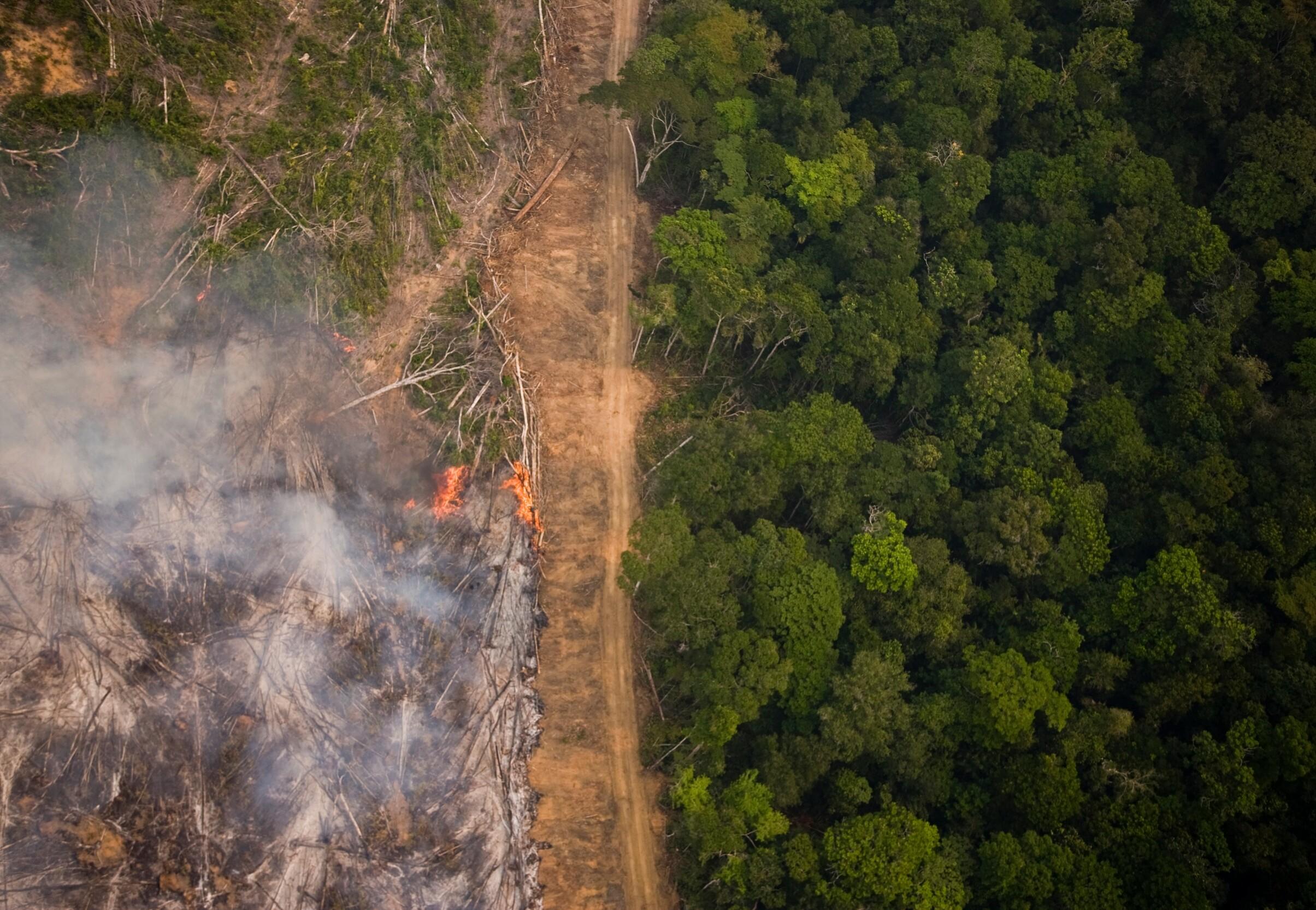 Amazon Rainforest in Burning Season