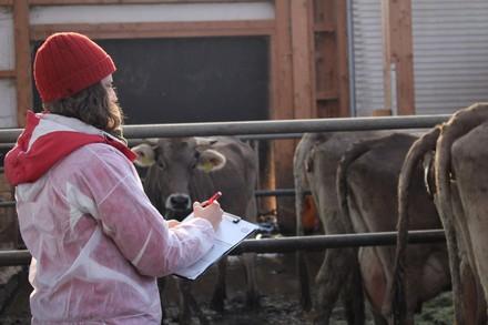 VIER PFOTEN kontrolliert die Rinderhaltung