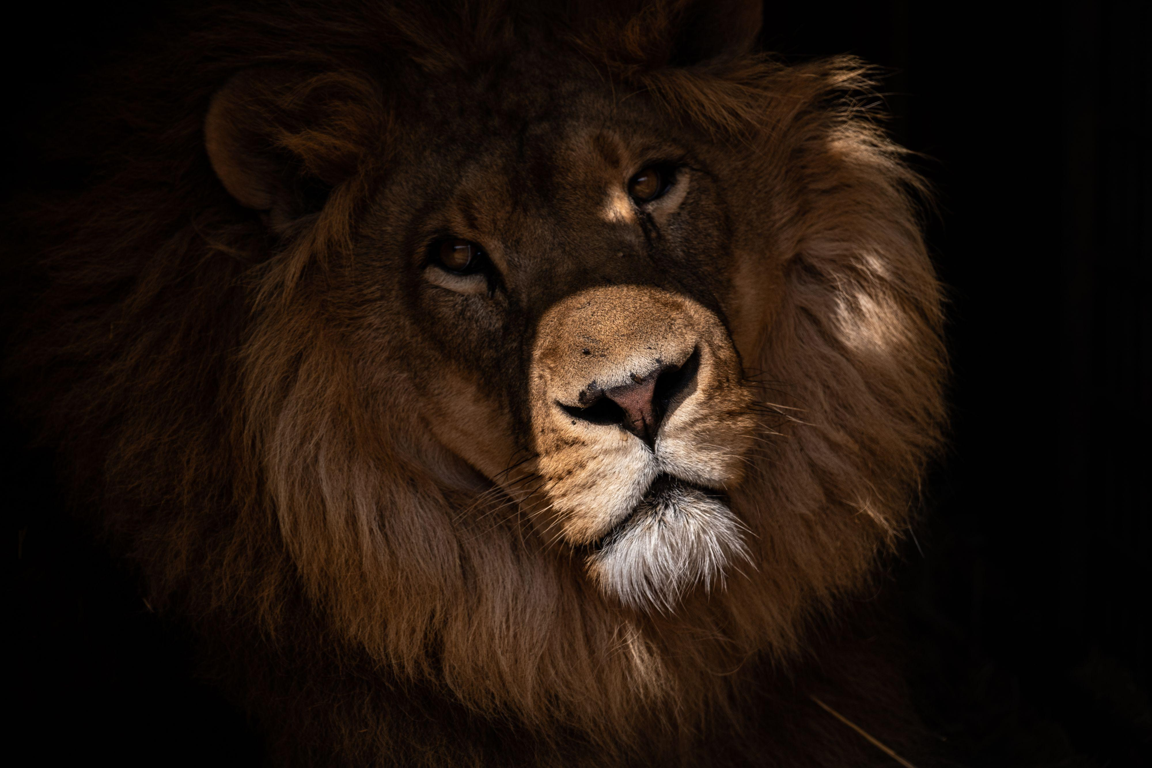 Support Lions in Need