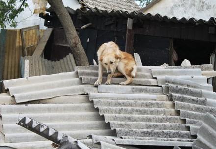 Hond in een rampgebied