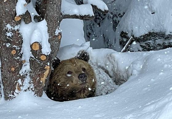 Meimo in der Winterruhe