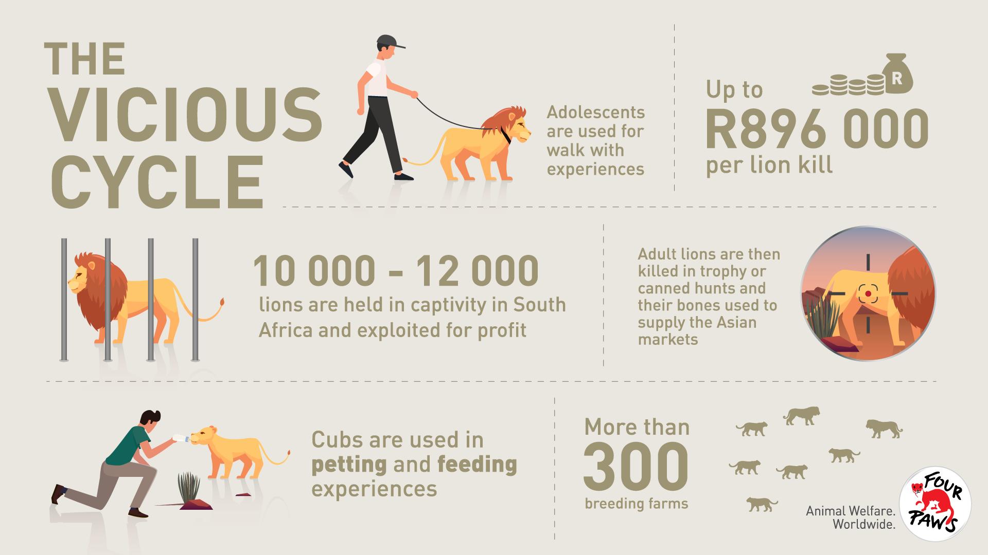 Animal Charity - Vicious Cycle