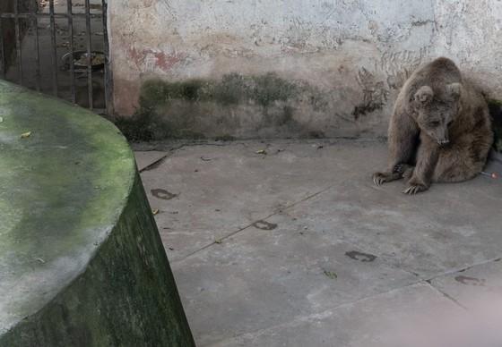 Die Bären fristen ein trostloses Dasein in ihren Käfigen