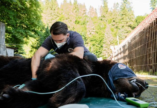 The rescue of the bears
