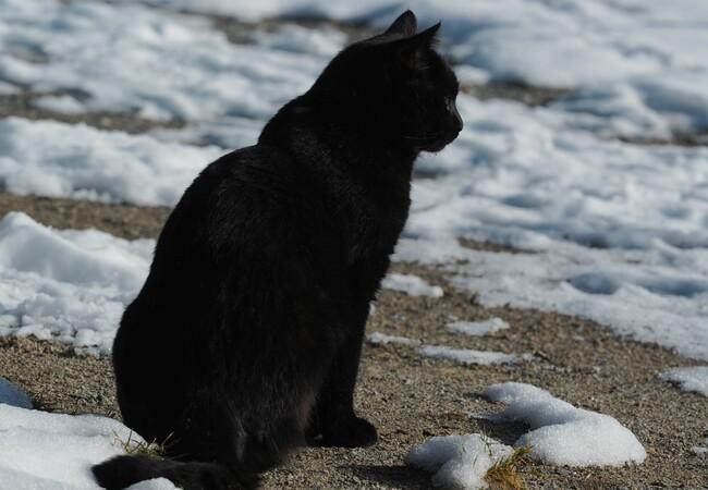 Schwarzer Kater Pino sitzt, teilweise liegt Schnee