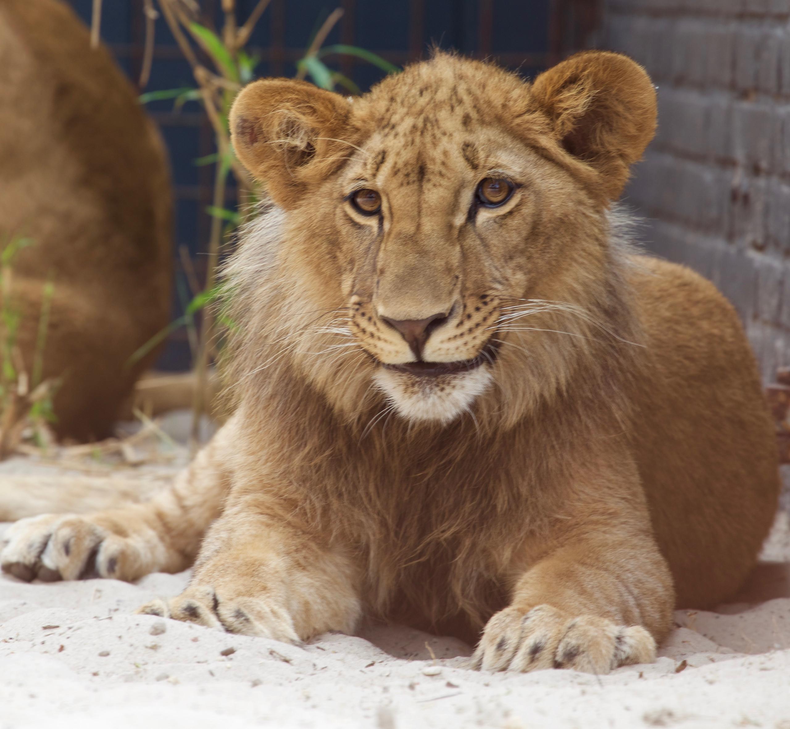FELIDA Big Cat Centre - Sanctuaries - Campaigns & Topics