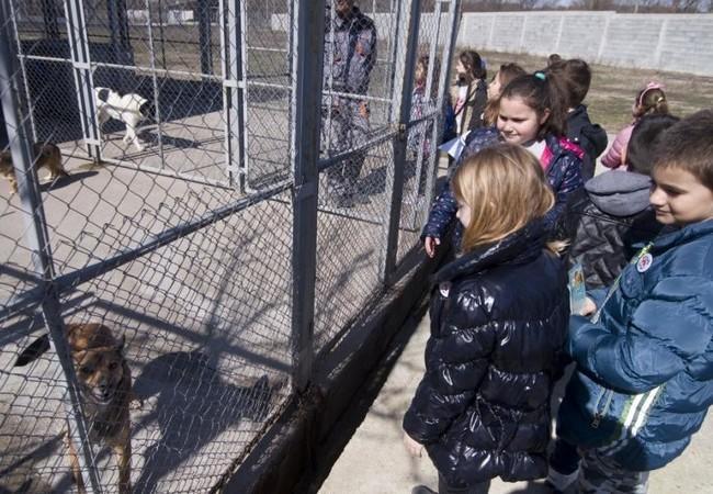 children-cage-dogs