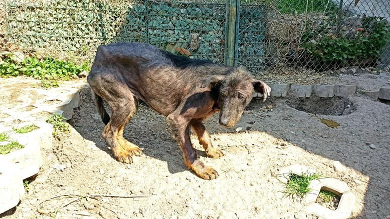dog with bad skin condition