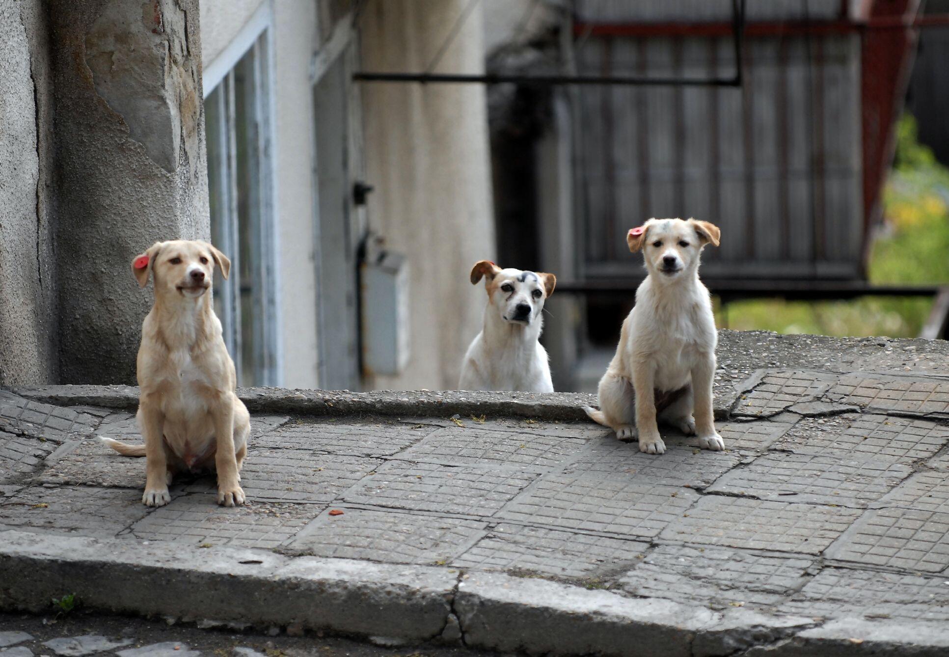 Aide aux animaux errants en Bulgarie