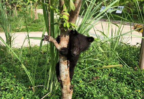 Mochi climbing