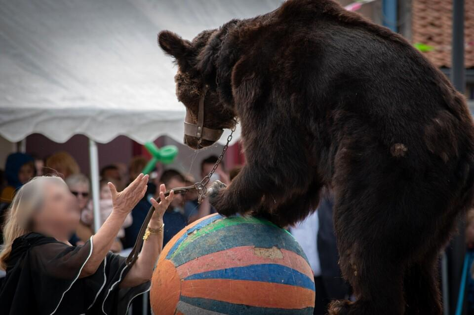 Red de beren van de galbeerindustrie
