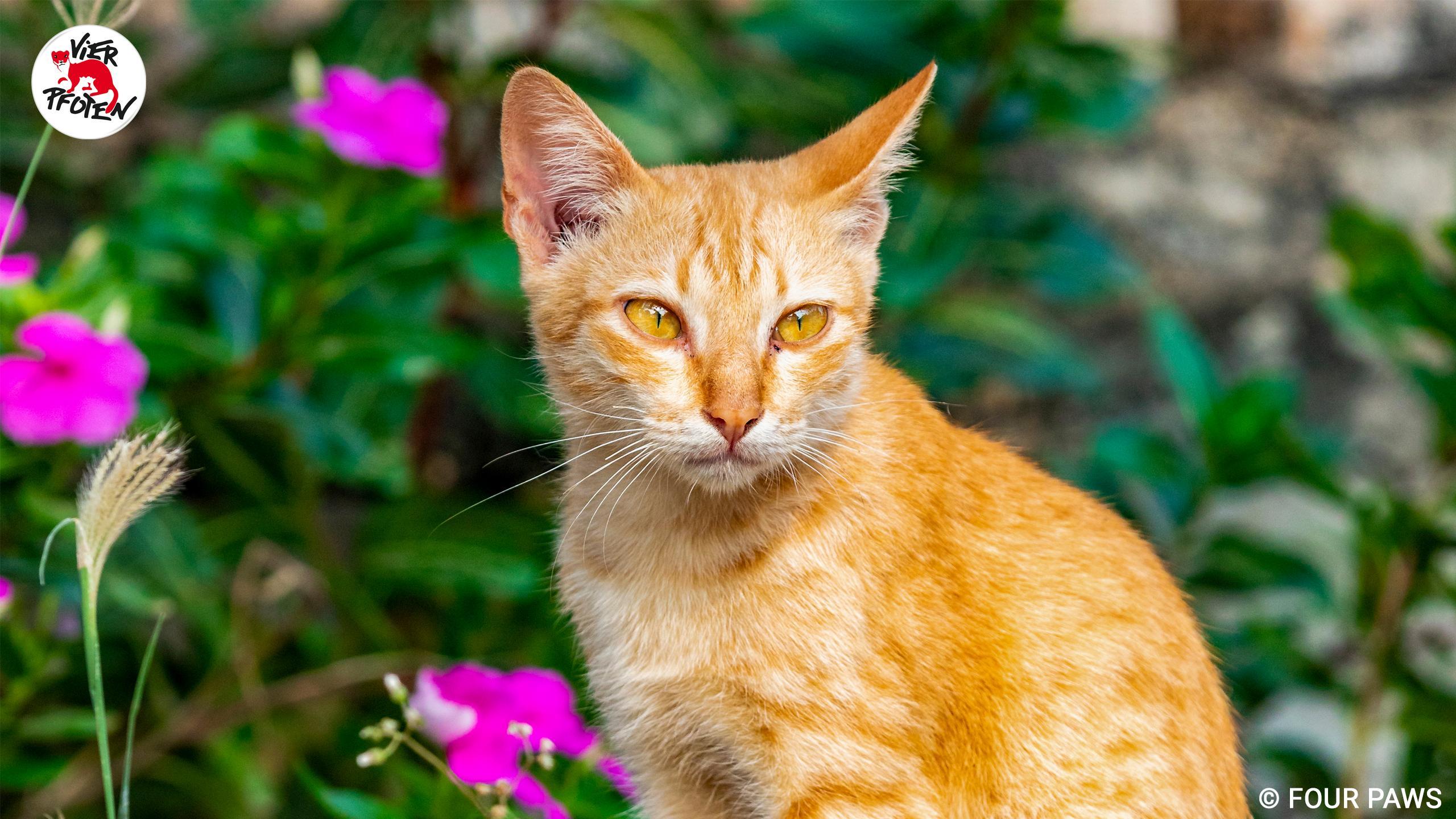 Katze auf Silk Island, 2020