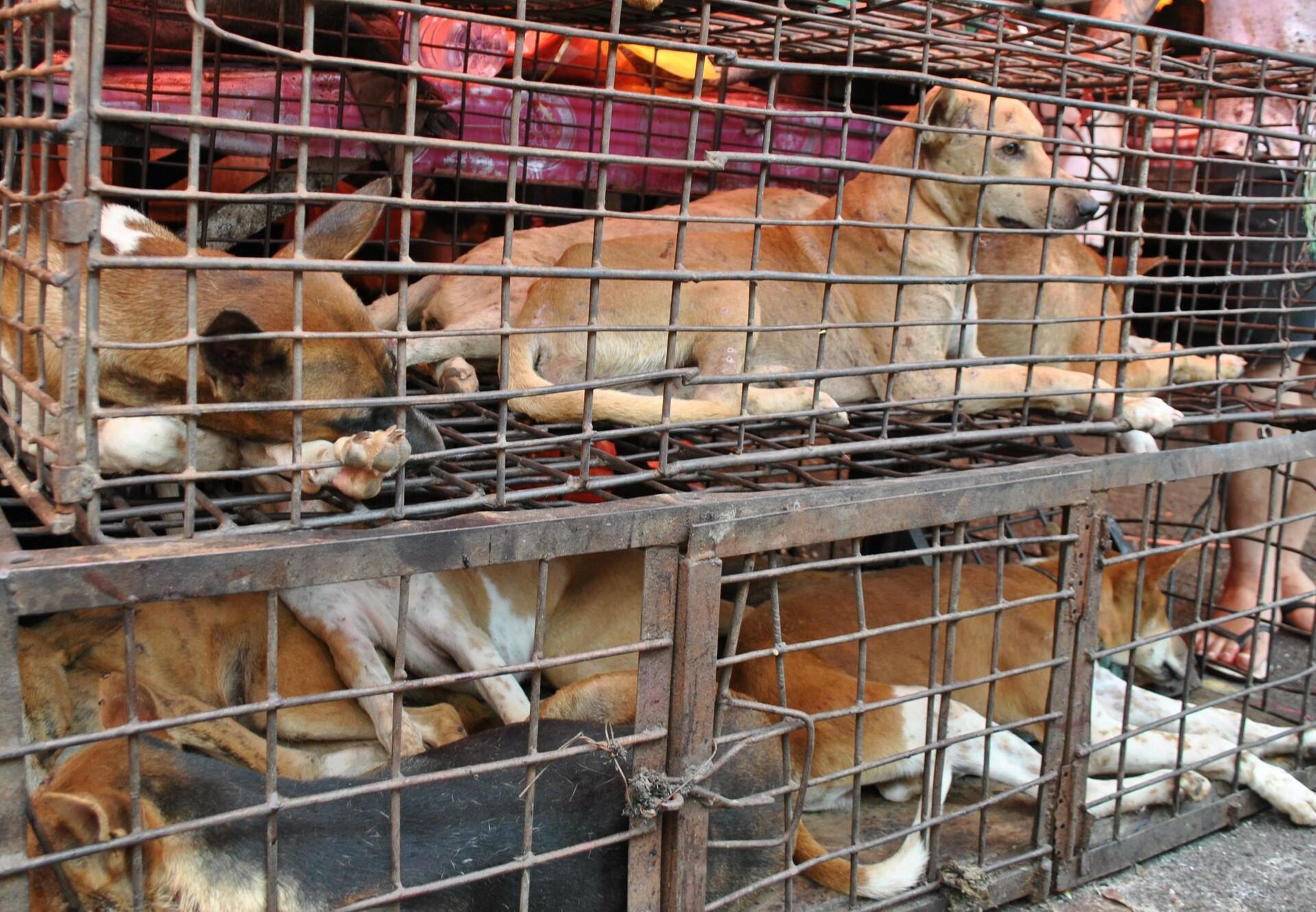 Honden in een kooi op een dierenmarkt