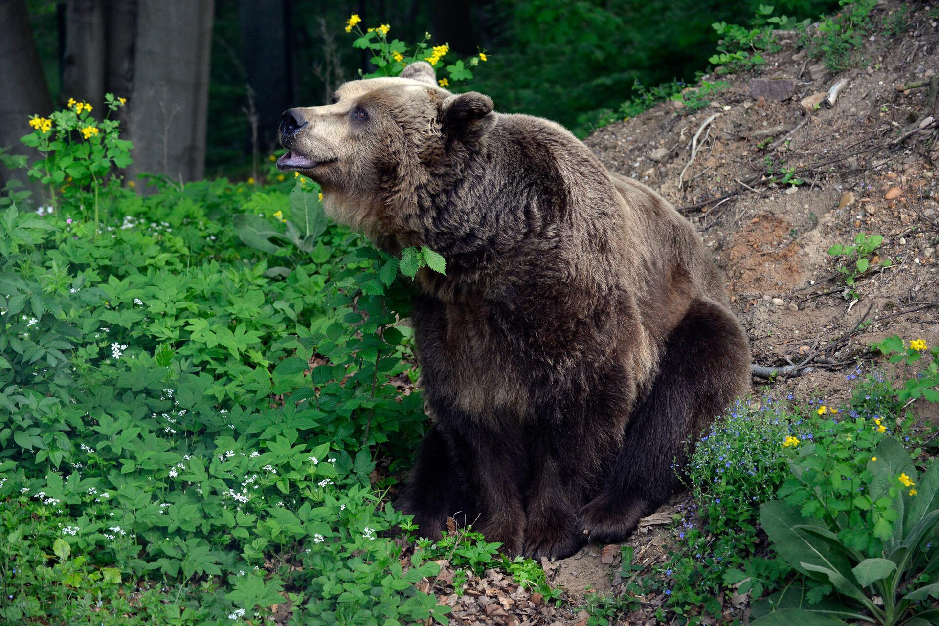 Bären entdecken im BÄRENWALD
