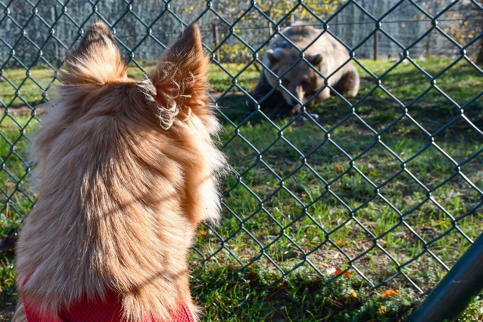 Hund trifft Bär im BÄRENWALD Müritz