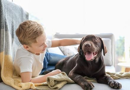 Cute little boy with dog on sofa at home