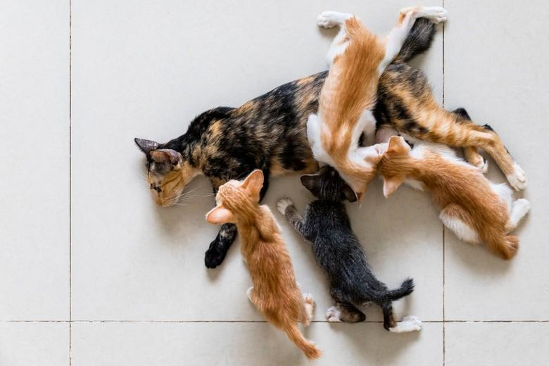 Shelters become overwhelmed with unwanted kittens