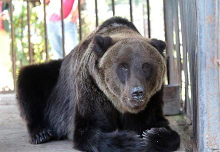 Bear Martha is being rescued from a closed restaurant