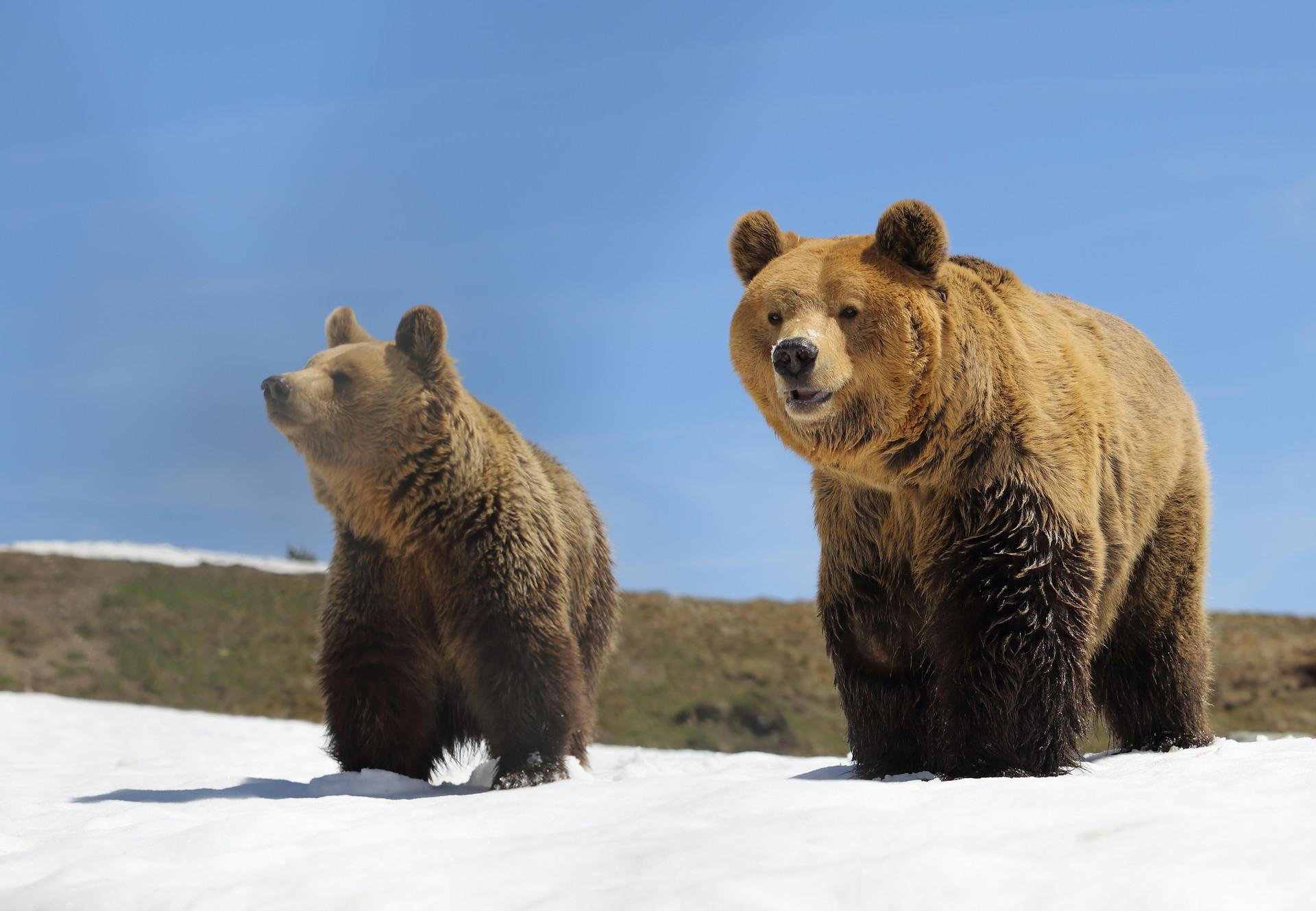 Bären Amelia und Meimo im Arosa Bärenland