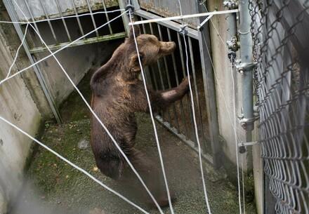Wild Animals in Zoos