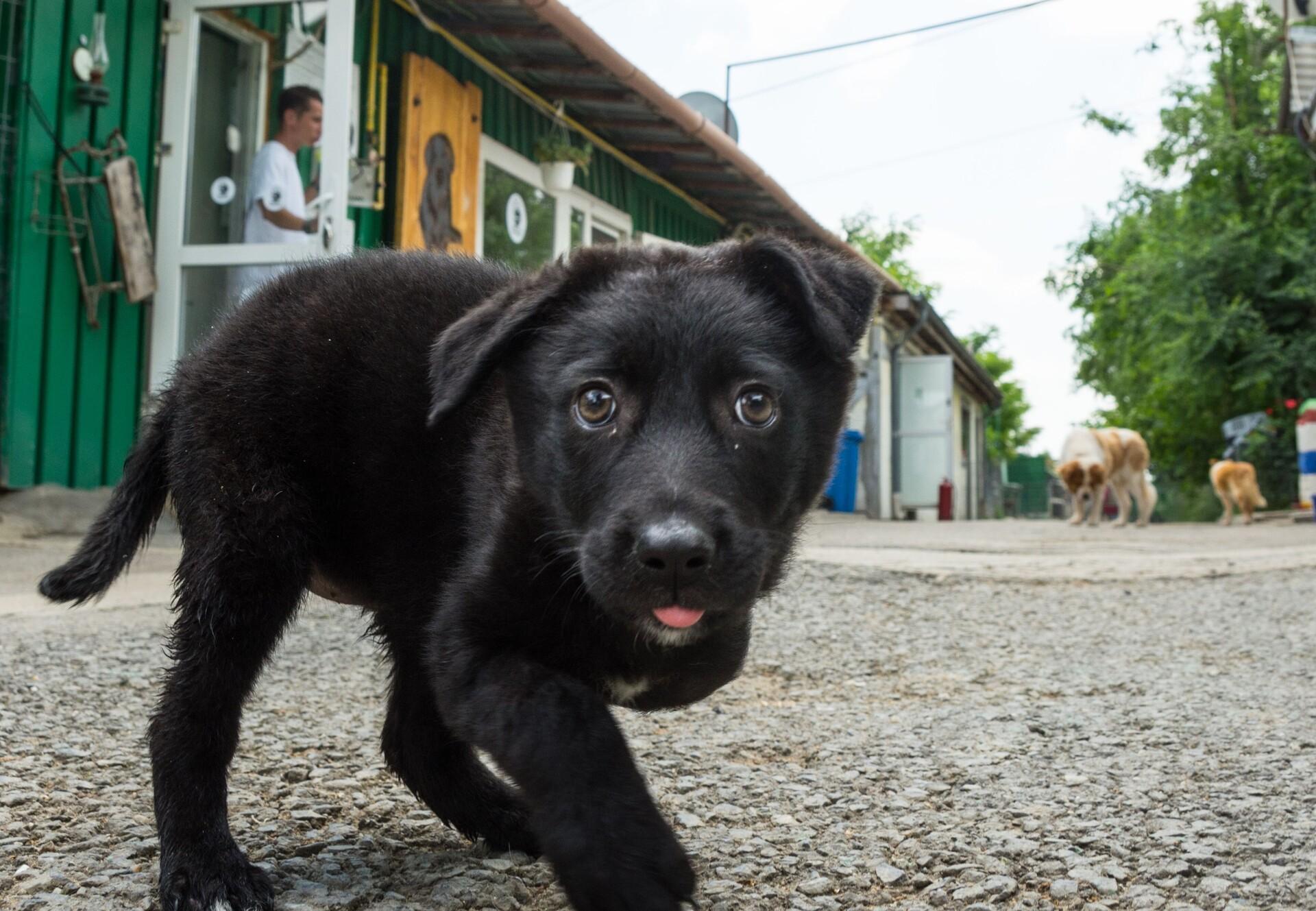 QUATRE PATTES Aide les animaux errants en Roumanie