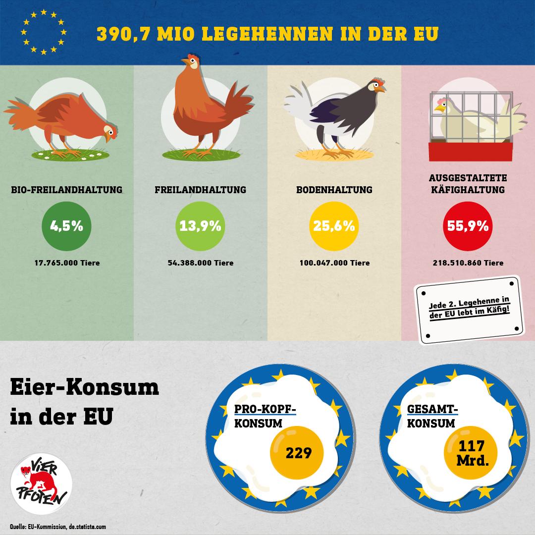 Legehennen in der EU (C) VIER PFOTEN