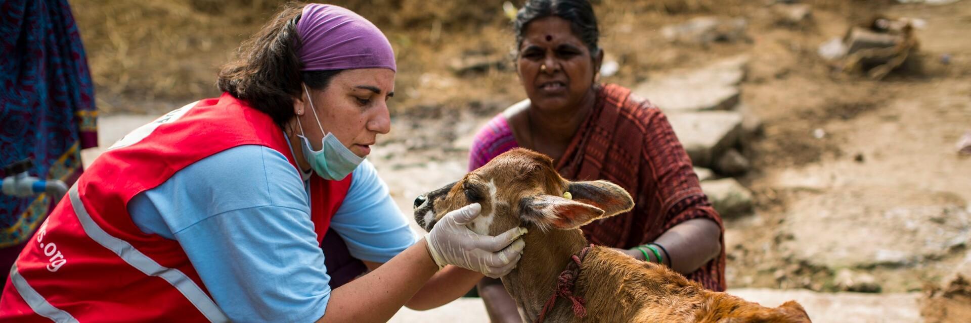 Tiere werden in Chennai Indien versorgt