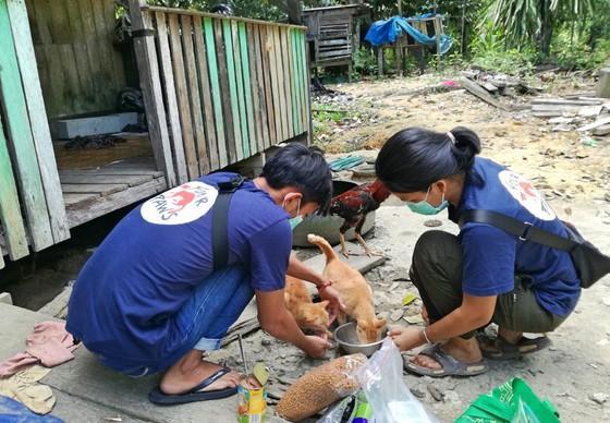 Feeding stray cats in Borneo