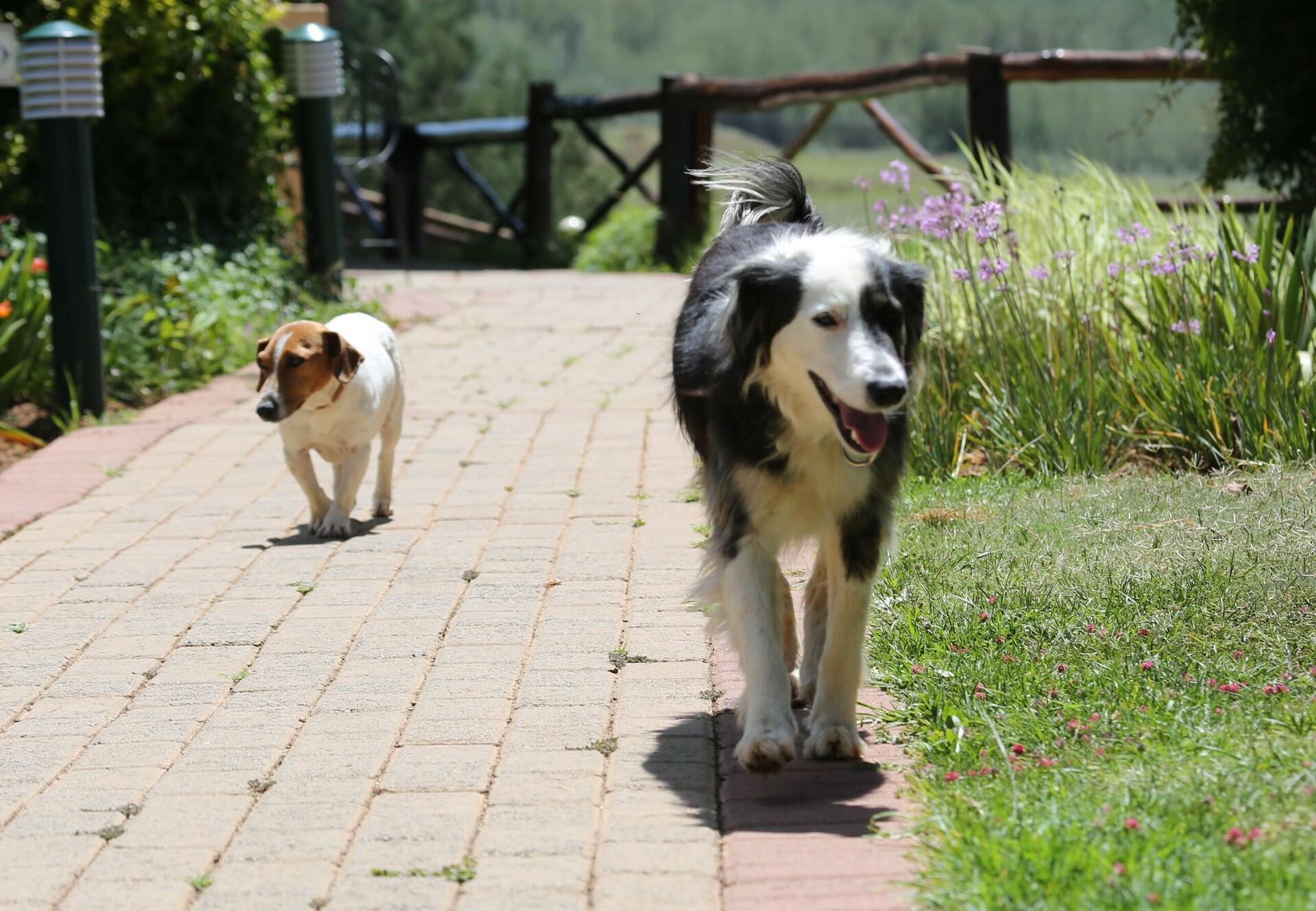 Der Asphalt kann schnell zu heiß für Hundepfoten werden.