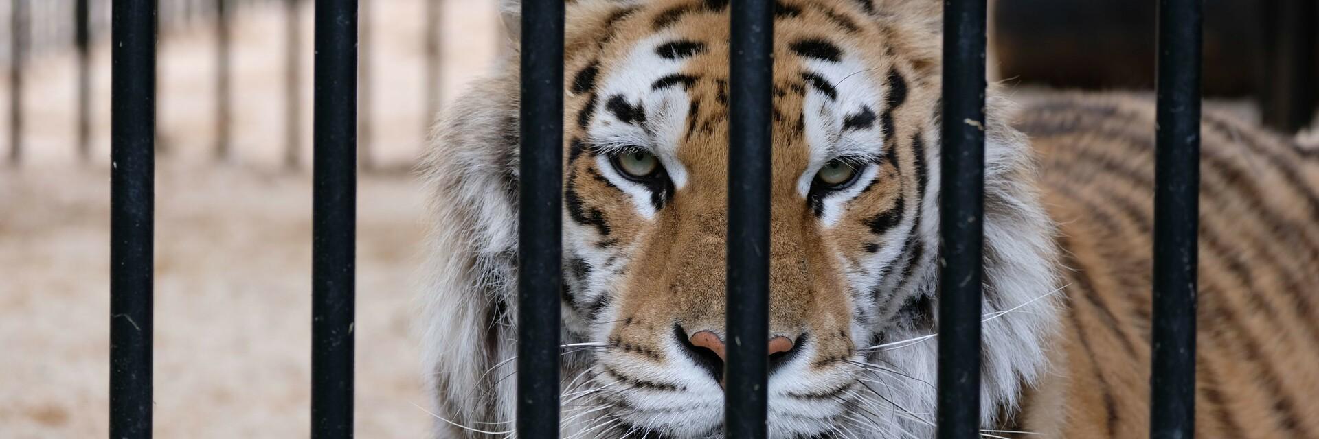 Animal Charity