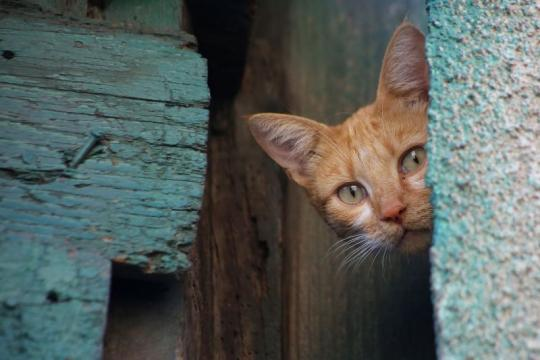 cat-wall-wood