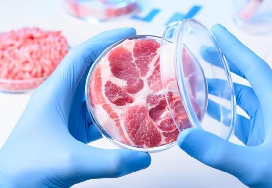 Meat sample in open petri dish