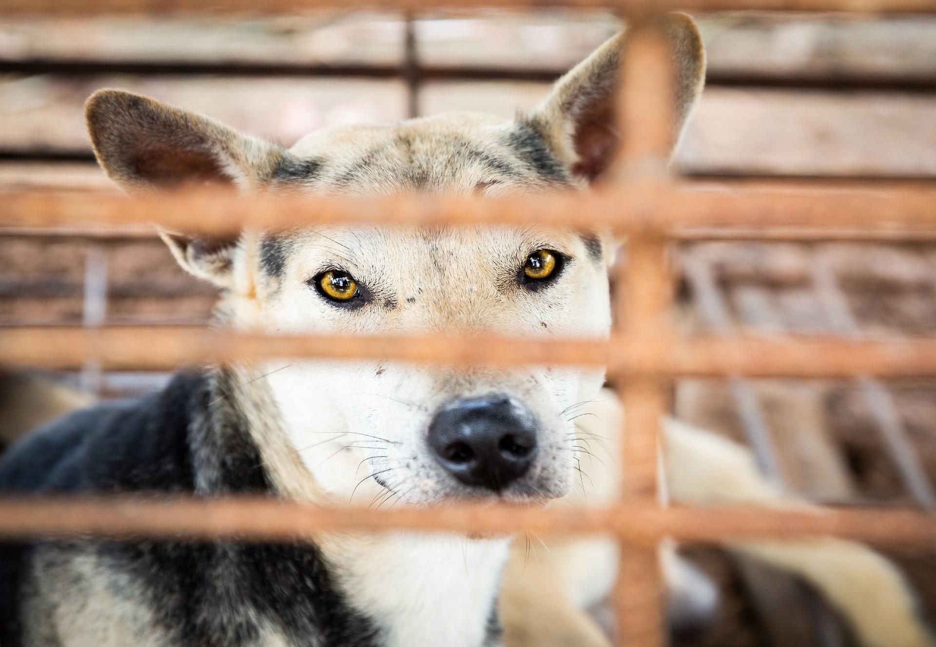 Hunde in einem Käfig