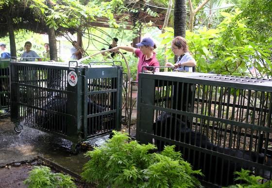 QUATRE PATTES sauve sept ours à bile