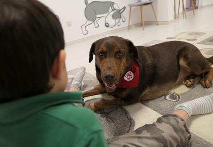 le chien de thérapie Shoko
