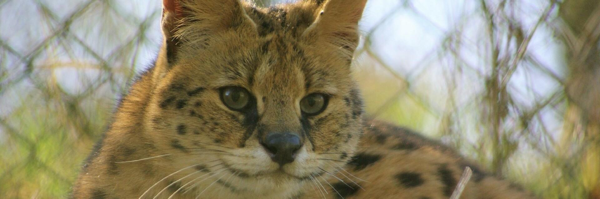 Help TIERART Wild Animal Sanctuary
