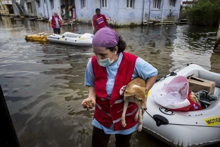 Hilfe für Tiere bei Katastrophen