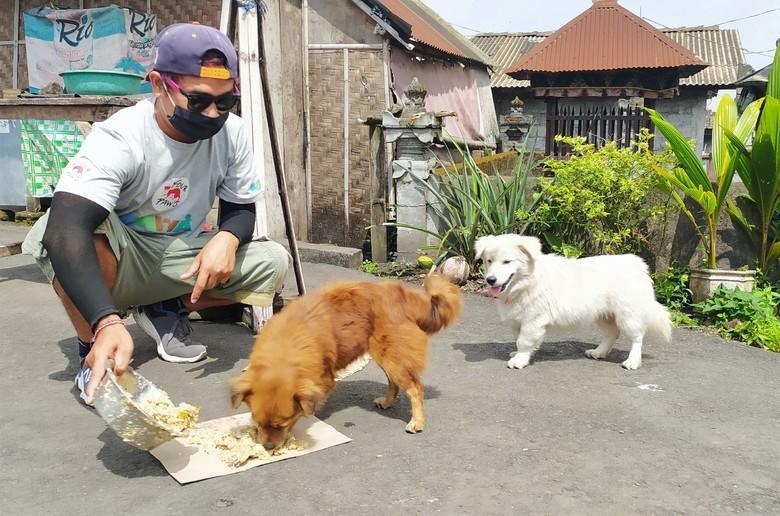 VIER PFOTEN Mitarbeiter füttern Hunde auf Bali