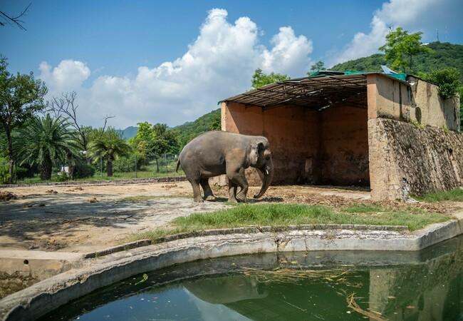 Der einsamste Elefant der Welt