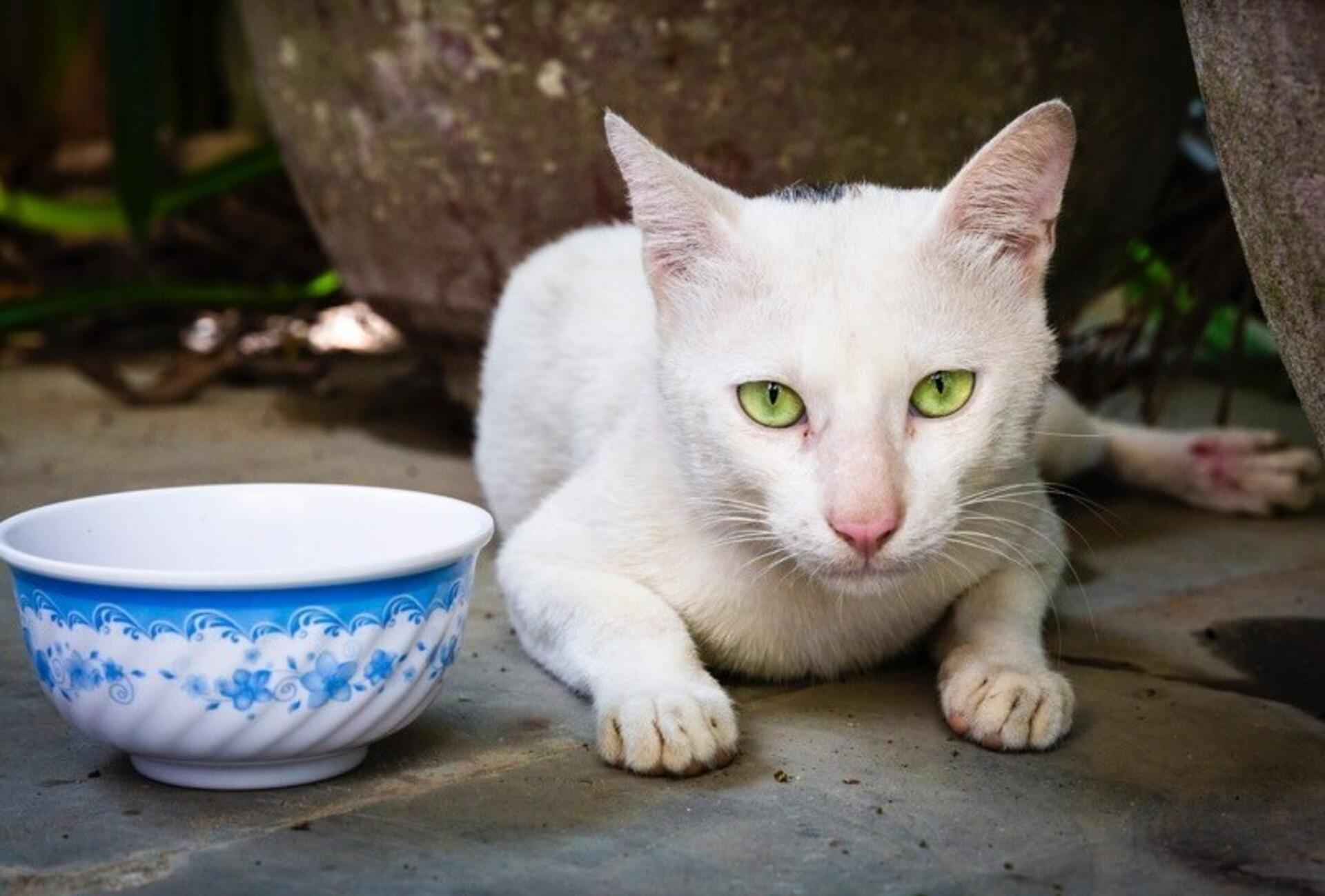 Meow a échappé au commerce de viande d'animaux en Asie
