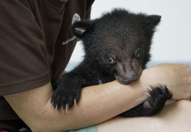 Bear cub Mochi with FOUR PAWS vet