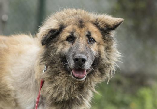 Dog Toto | куче Тото