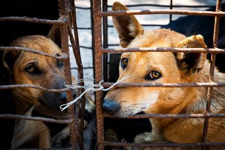 Hunde gefangen in Käfig