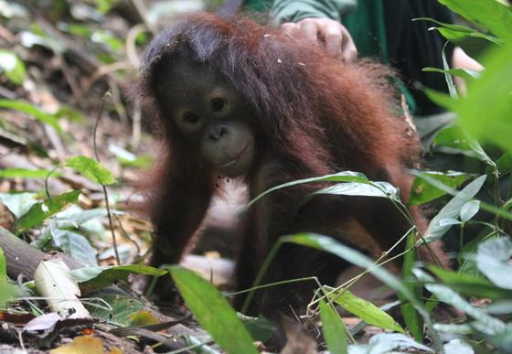 Little Damai on the forest floor