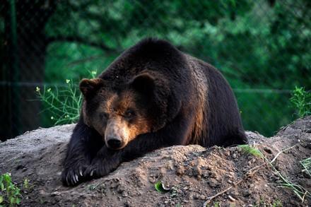Bear laying on a rock