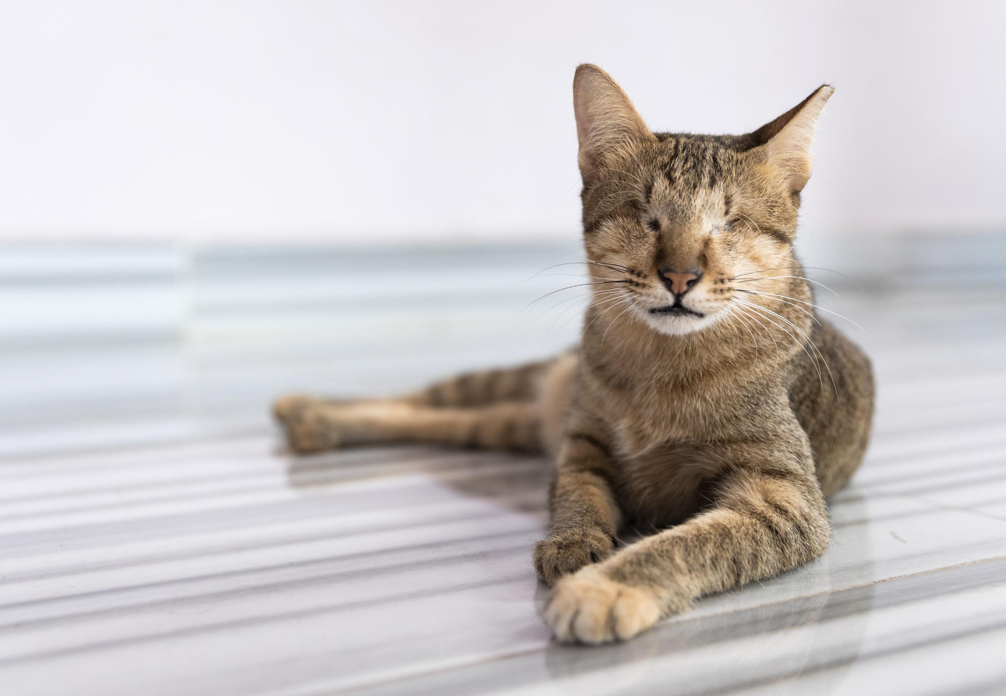 Cat Mina