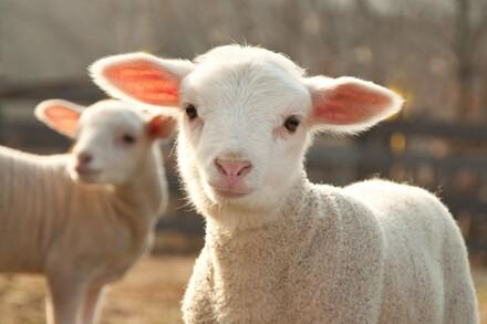 Farm Animals Topics Campaigns Topics Four Paws Australia