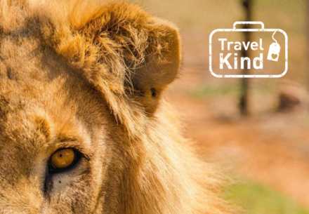 Tips for animal-friendly travel