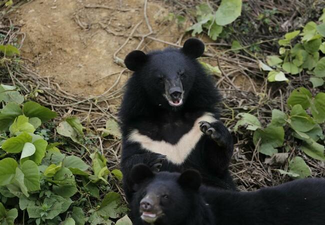 Die Bären Lili und Lulu