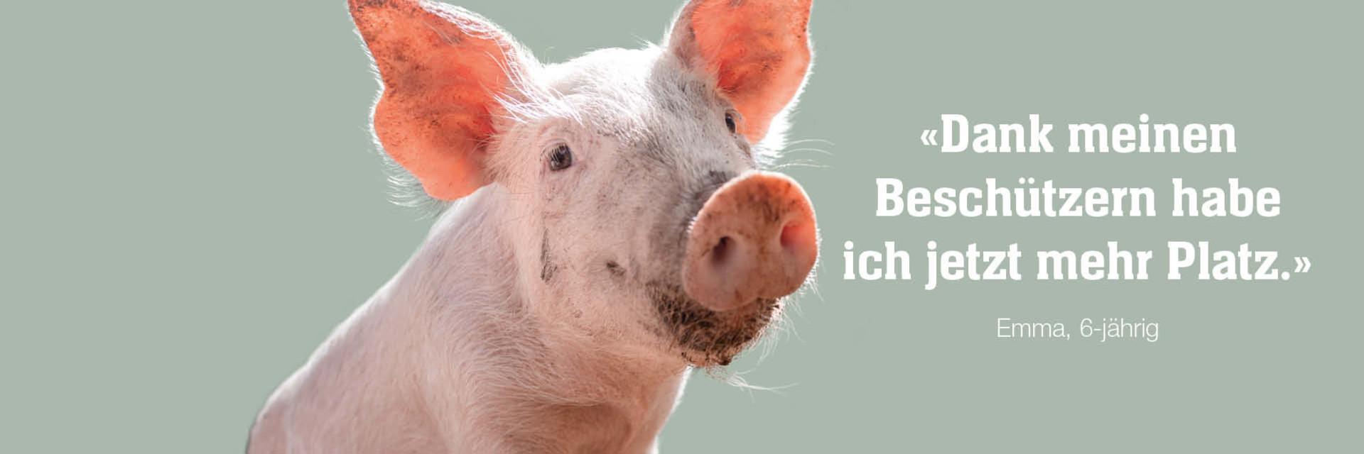 Schwein Emma